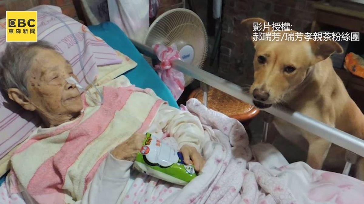 【影片】病母影片遭盜亂編「只剩狗相伴」 顧14年兒心痛自責:對不起已逝母親