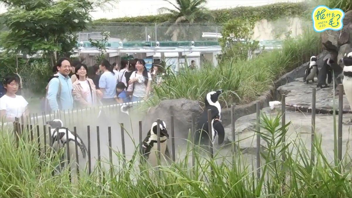 【影片】來日本必看「會飛天的企鵝」!東京自由行景點大揭密