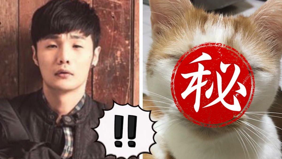 【影片】 別再睡了!逗趣貓神似歌手李榮浩 迷人小眼睛收服全家人