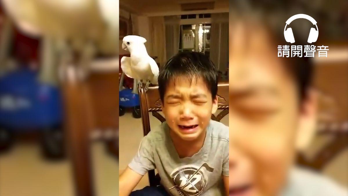 【影片】白目鸚鵡咬壞筆惹哭小主人 搖頭拒絕道歉還大喊「好乖哦」