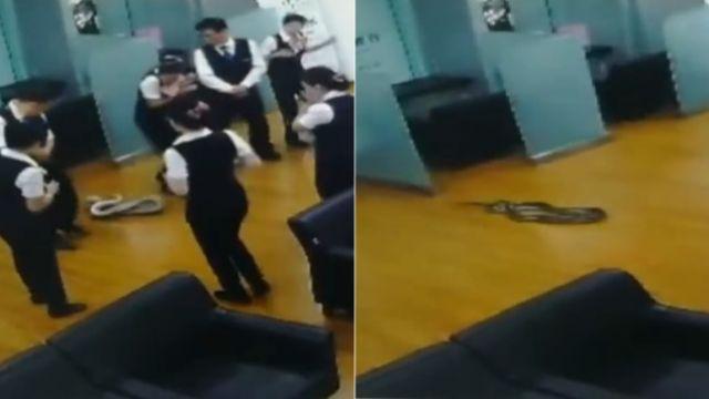 銀行開晨會…「2公尺蟒蛇」從天而降!女行員嚇到奪門而出