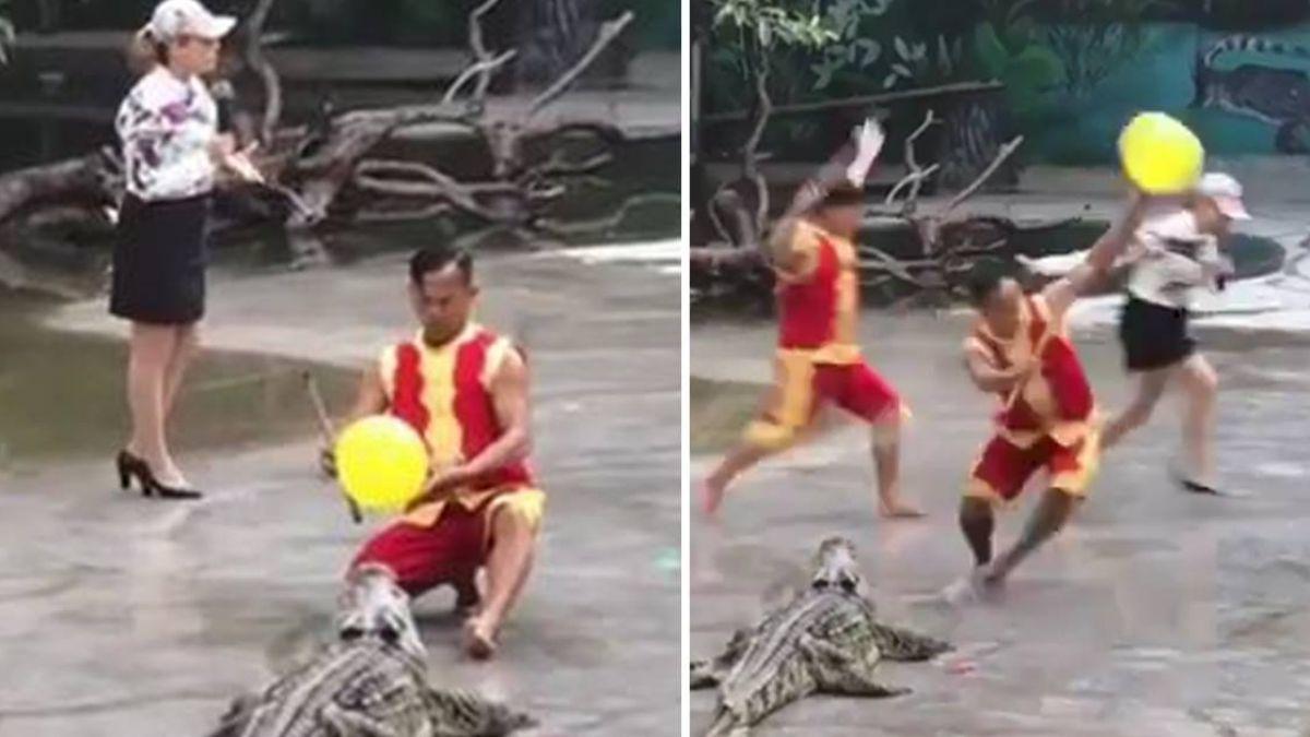 【影】拿氣球塞鱷魚嘴ING!下秒豬隊友「驚人之舉」50萬人笑掉大牙