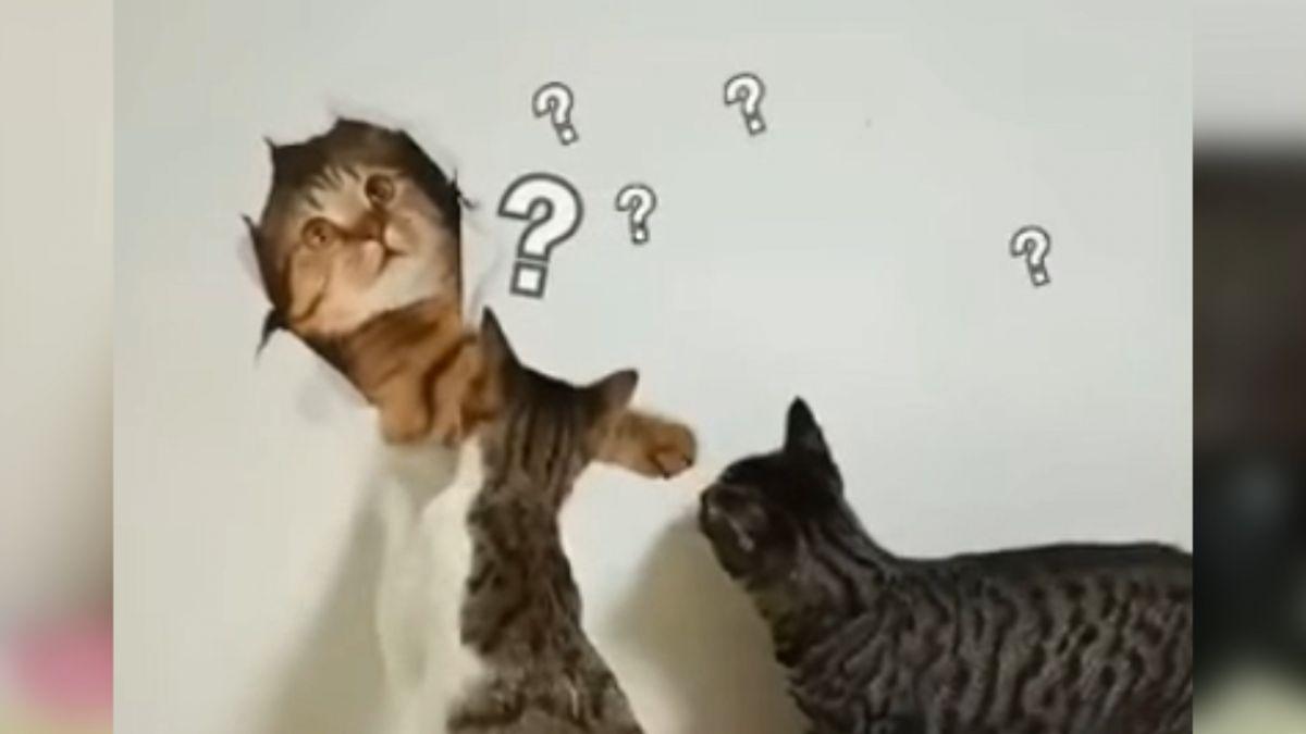 【影片】「兄弟出來啊」仿貓壁貼太逼真 2憨喵上前拍打求認識